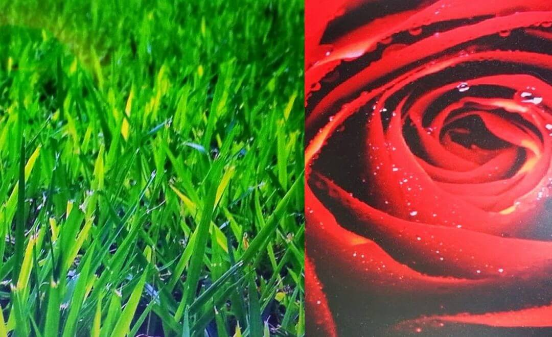 ירוק ואדום