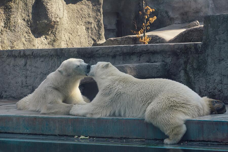 גן החיות בבודפשט