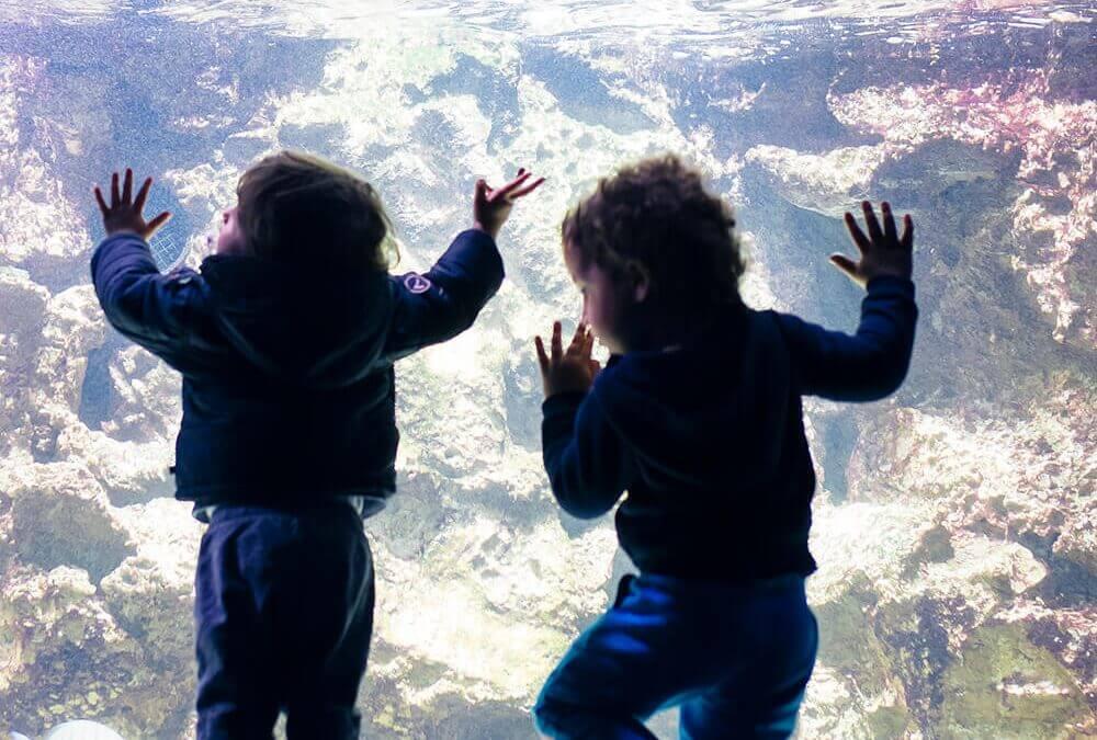 טיולים ואטרקציות לילדים בפסח