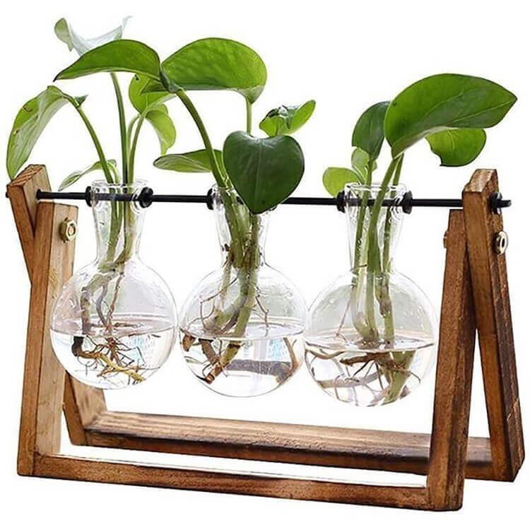 פלאנטר זכוכית ועץ לגידול ייחורים