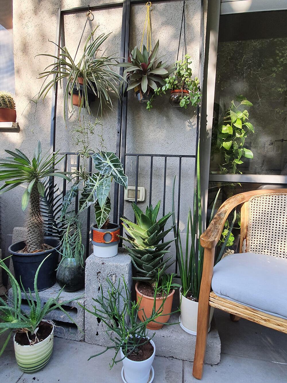 צמחים שמתאימים למרפסת