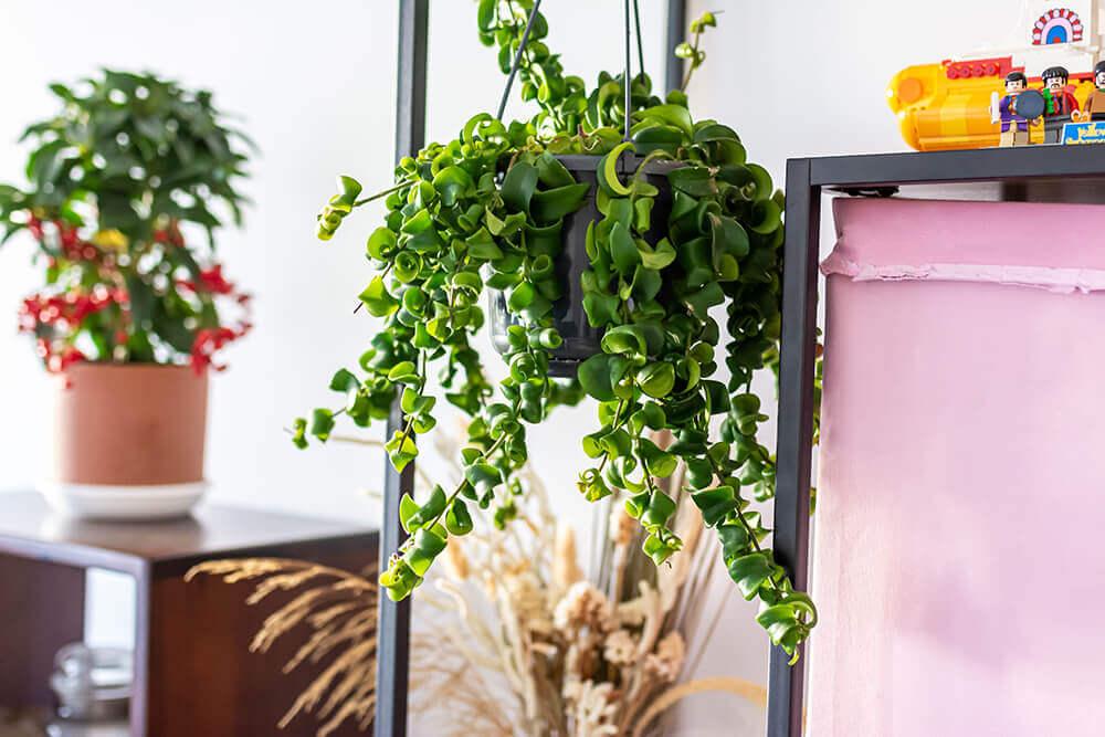 כל מה שצריך לדעת על טיפול בצמחי בית
