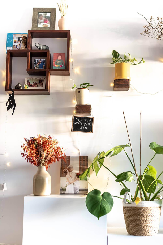 המדריך המלא לצמחי בית